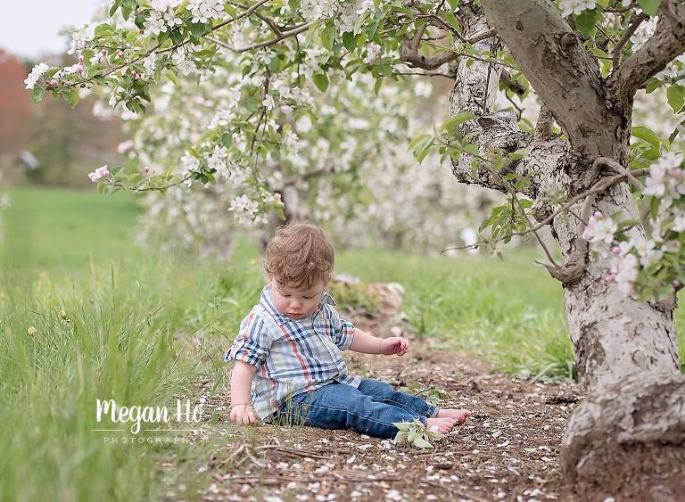 apple tree with blossoms in southern nh little boy looking down playing. in dirt